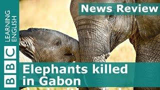 News Review: Elephants killed in Gabon