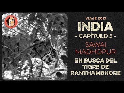 Viaje a India 2013 - Cap. 3 SAWAI MADHOPUR - En busca del tigre de Ranthambhore