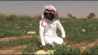 أرزاق- عبد الرحمن بن ربيعان- مزارع- السعودية
