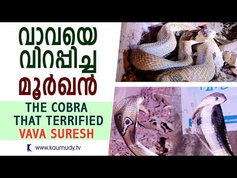 The Cobra that Terrified Vava Suresh | Snake Master | Kaumudy TV