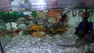 Aquarium in Bangladesh
