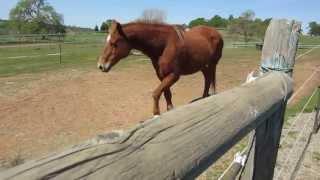 Horse greeting