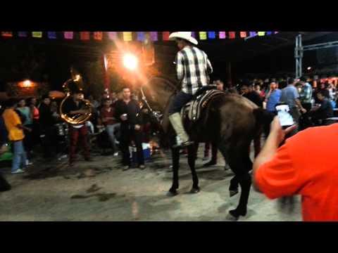 Caballo Bailador En Las Fiestas De San Benito 2014