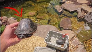 We Got TURTLES for the POND!!