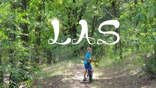 THE FOREST STORY (czyli wycieczka do Mazowieckiego Parku Krajobrazowego)