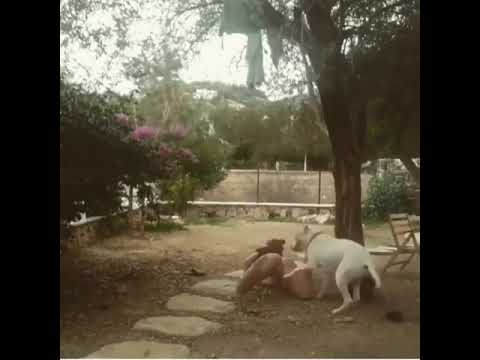 Xxx Mp4 Funny Dog Try To Sex With Woman Dog Sex 3gp Sex