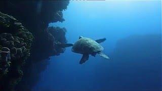 Ocean (Be a predator) Documentary HD