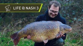 Life At Nash 3 - Big Carp Fishing Behind The Scenes