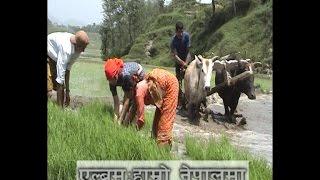 Hamaro Nepal Ma - Hari Thapa & Indira Gurung