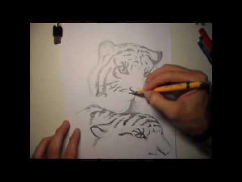 Tigres desenho à mão livre