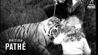 Pet Tiger (1954)
