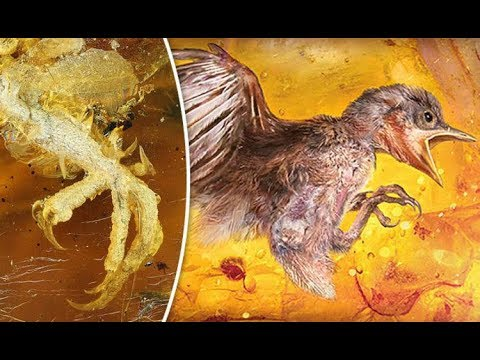Xxx Mp4 100 MILLION Year Old BABY BIRD Found Trapped In Amber 3gp Sex