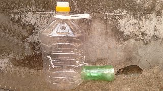 Rat Traps Homemade , How to Make a Simple Mouse Trap from Plastic Bottle