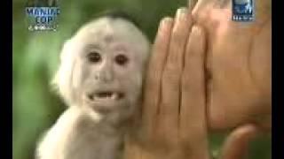 TARZAN funny clip in punjabi