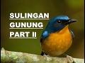 Download Burung sulingan gunung eps ii