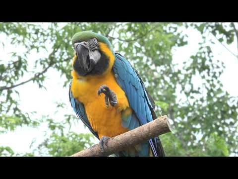 4K Tropical Birds - FDR-AX100