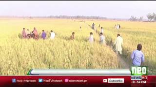 Neo News Exclusive Footage From Pak India Border   Shakar Garh Sector   Neo News