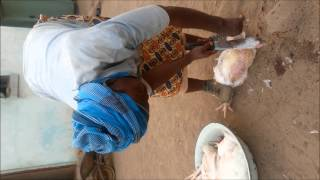 Africa Experience: How to kill a chicken using a knife
