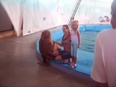 Xxx Mp4 Funny Videos Hit On By Daddy Walrus 3gp Sex