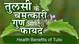 Tulsi Ke Fayde   Benefits of tulsi(indian holy basil) leaves in hindi   तुलसी के 22 फायदे और उपयोग