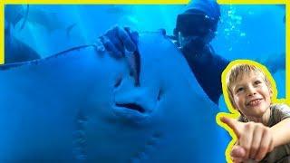 Feeding GiANT Stingrays Fish at the Aquarium - Sea Creatures For Kids