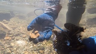 Magnet Fishing w/Brute Magnetics 1000 lb Magnet: Underwater View