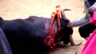 patricia de leon speaks out against bull fighting for peta
