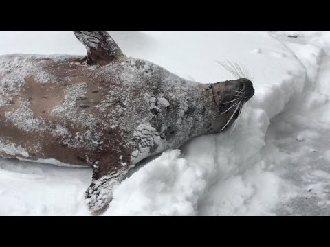 watch Snow day at the Oregon Zoo