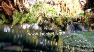 mTunes Videos: Crocodile