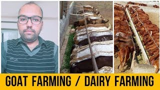 Goat farming / Dairy farming in Pakistan India Business Tips