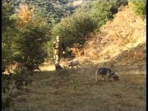 caza de conejos pt1