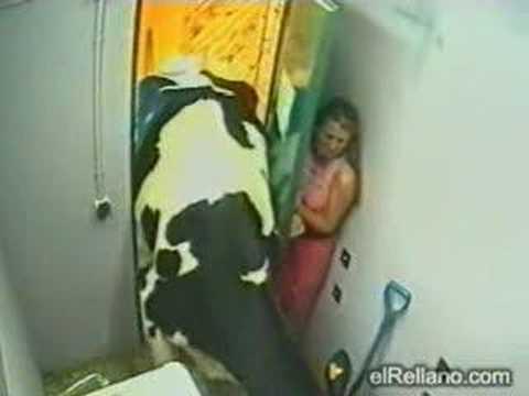 Xxx Mp4 Big Brother Crazy Cow Very Funny No Xxx 3gp Sex