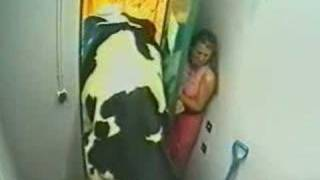 Download Big Brother Crazy Cow very funny no xxx 3Gp Mp4