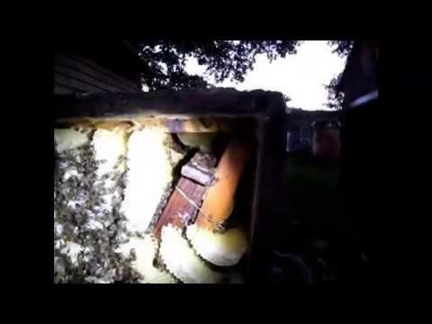 видео ловим бродячие рои