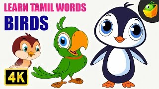 Birds | Learn Tamil Words (Spelling) | Magicbox Animation | Tamil Rhymes for Kids