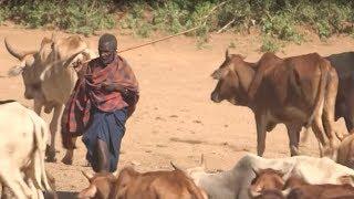 Acción por el clima en Tanzania - Servicios para la seguridad alimentaria