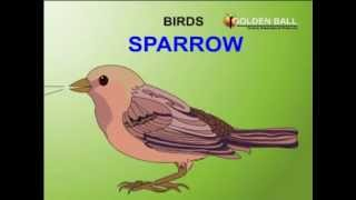 The BIRDS Name And sound  Kids animation