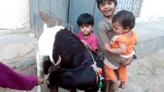ABDUL RAHMAN & Family Eid ul Azha