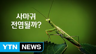 사마귀도 만지면 전염될까? / YTN (Yes! Top News)