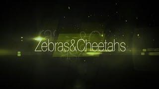 Zebras & Cheetahs TV Show: PILOT