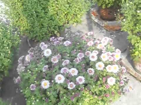 beautiful flower garden in my indian village house 1