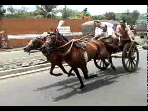 Xxx Mp4 Horse Race 3gp 3gp Sex