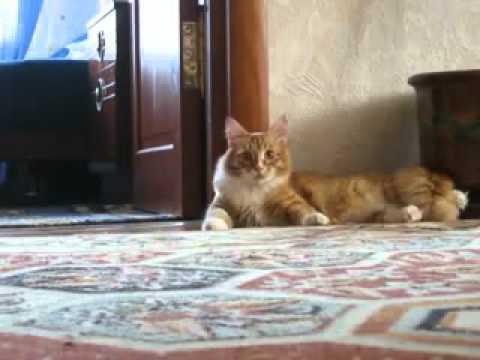 Cat makes a wheelie