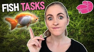 A Day of Little Fishroom and Aquarium-Related Tasks | Daily Vlog Challenge #19
