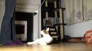 Maine Coon Cats in Slow Motion (High Definition)