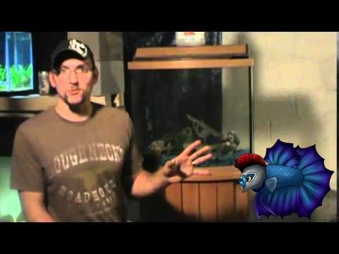 watch How To Make Some Money By Reselling Fish Tanks