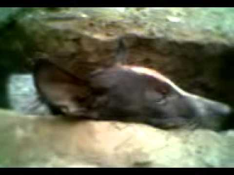 Xxx Mp4 My Dog In Death Last Videos Indian Style Www Yaaya Mobi 3gp Sex