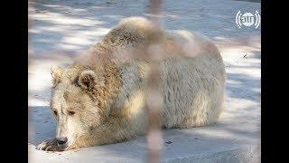 گزارش ویژه همایون افغان در باغ وحش کابل