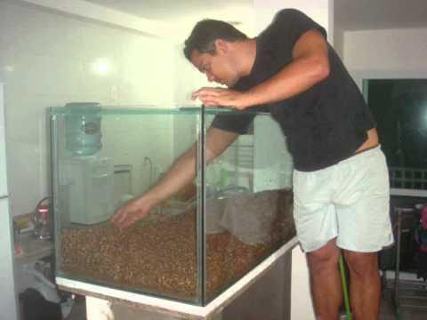 Aquario plantado de 700 litros com filtro externo eheim 2078 eletronico.