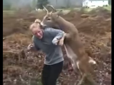 Xxx Mp4 Deer Tries To Mate With Girl 3gp Sex